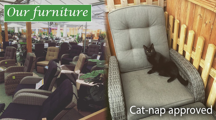Cat nap approved furniture